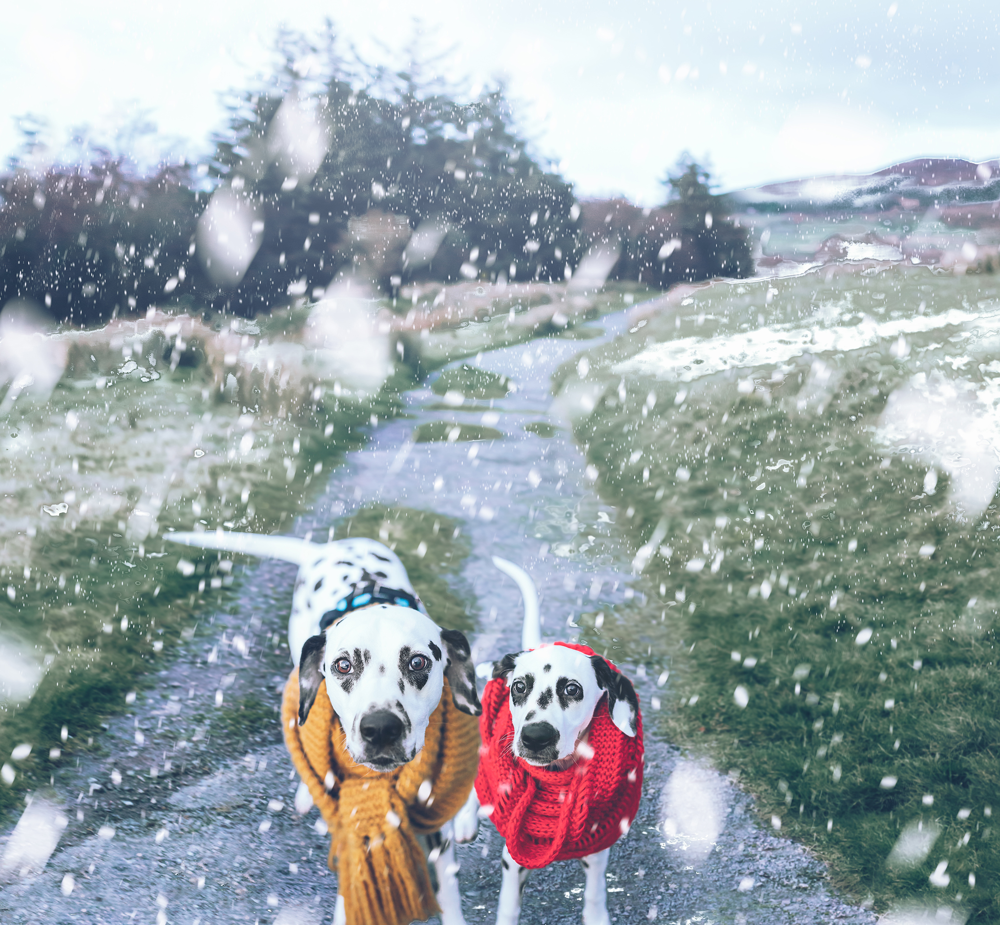 Boo&Scout's snow